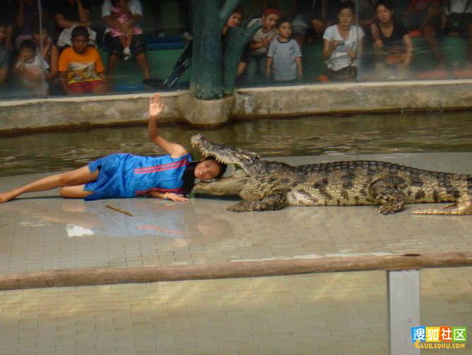 实拍鳄鱼口中的帅哥美女;;