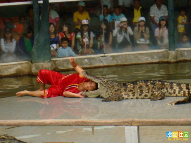 鳄鱼鳄鱼图片 鳄鱼吃人3;
