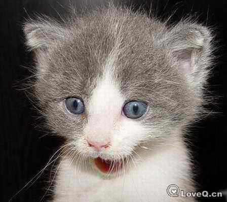 猫 表情.jpg图片